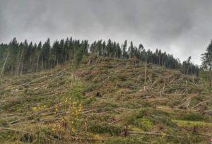 ATTENZIONE!! trekking e Passeggiate dopo il forte vento del 30 ottobre